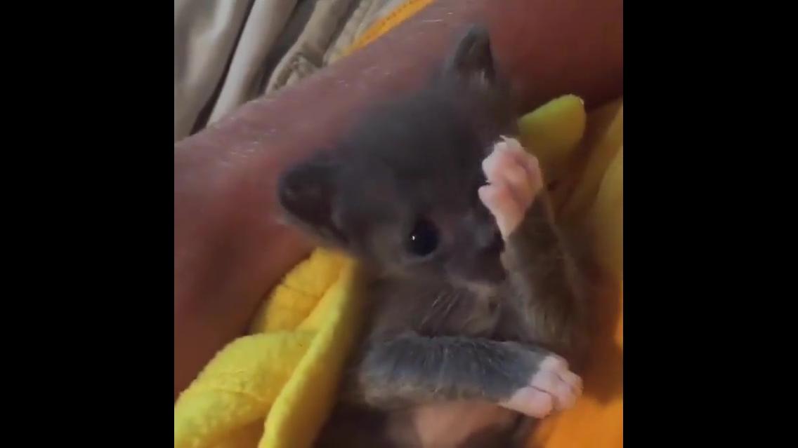 Filhotinho de gato mais lindinho que você vai ver hoje