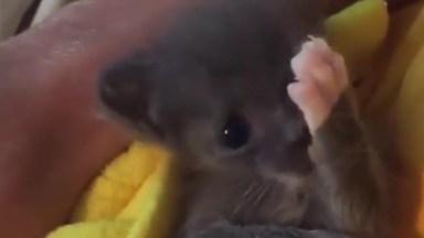 Filhotinho De Gato Mais Lindinho Que Você Vai Ver Hoje, Que Fofura!