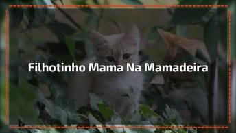 Filhotinho De Gato Mama Na Mamadeira Dentro Do Berço, Olha Só Que Fofo!