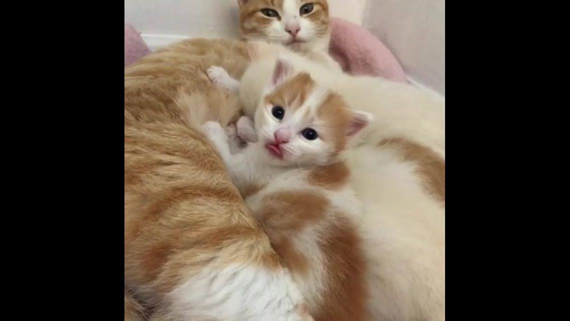 Filhotinho de gato olhando desconfiado para câmera