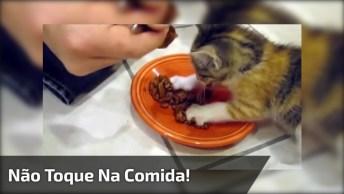 Filhotinho De Gato Que Não Deixa Ninguém Tocar Na Sua Comida!