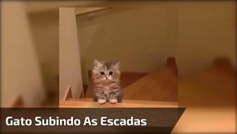 Filhotinho De Gato Subindo As Escadas, Que Coisa Mais Fofinha!