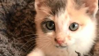 Filhotinho De Gato Tentando Mamar Na Coberta, Olha Só Que Fofinho!