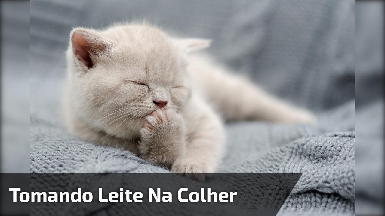Filhotinho de gato tomando leite na colher, olha só que coisinha mais fofinha!