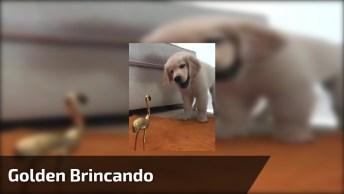 Filhotinho De Golden Retriever Brincando Com Escultura De Flamingo!