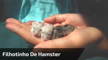 Filhotinho De Hamster Comendo, Olha Só O Tamaninho Dele Que Fofura!