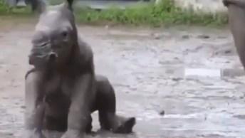 Filhotinho De Rinoceronte Imitando A Mamãe, Muito Fofinho!