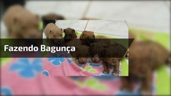 Filhotinhos De Cachorrinhos Fazendo Bagunça Na Caminha, Confira!