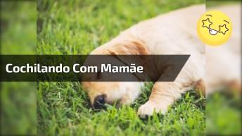 Filhotinhos De Cachorro Cochilando Com Mamãe, Olha Só Que Fofura!
