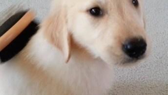 Filhotinhos De Cachorro, Como Não Amar Estas Criaturinhas De 4 Patas!