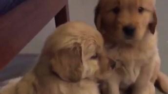 Filhotinhos De Cachorro Fazendo Coisas Fofas, Tem Como Não Amar?
