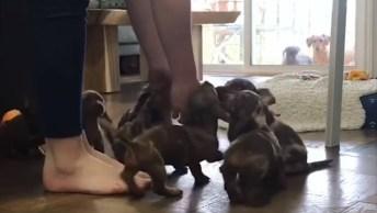 Filhotinhos De Cachorro, Olha Só A Quantidade De Amiguinhos!