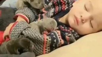 Filhotinhos De Cachorro Tirando Um Cochilo Com Garotinho, Que Vídeo Fofo!