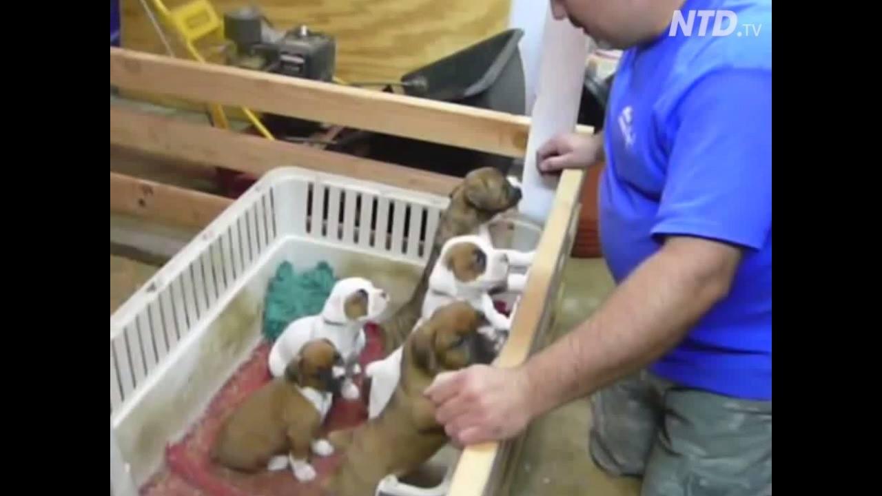 Filhotinhos de cachorros dormem quando seu dono canta, confira!!!