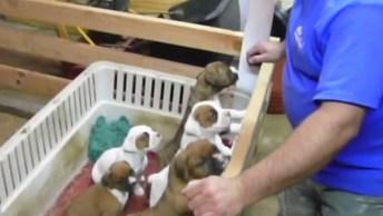 Filhotinhos De Cachorros Dormem Quando Seu Dono Canta, Confira!