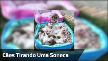 Filhotinhos De Cachorros Dormindo Coma Barriga Para Cima, Quanta Fofura!