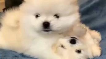 Filhotinhos De Cachorros Super Fofinhos, Você Vai Amar Eles!