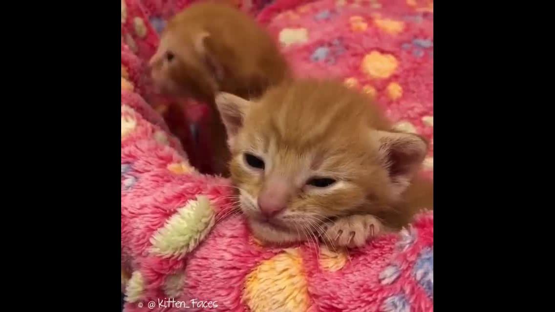 Filhotinhos de gatinhos amarelinhos