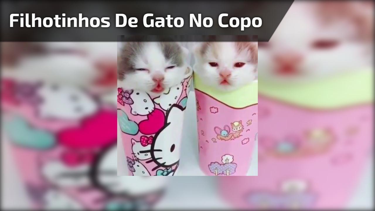 Filhotinhos de gato no copo