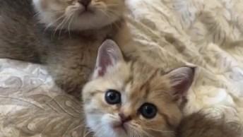 Filhotinhos De Gatos Brincando Em Cima Da Cama, Que Coisa Mais Fofa!