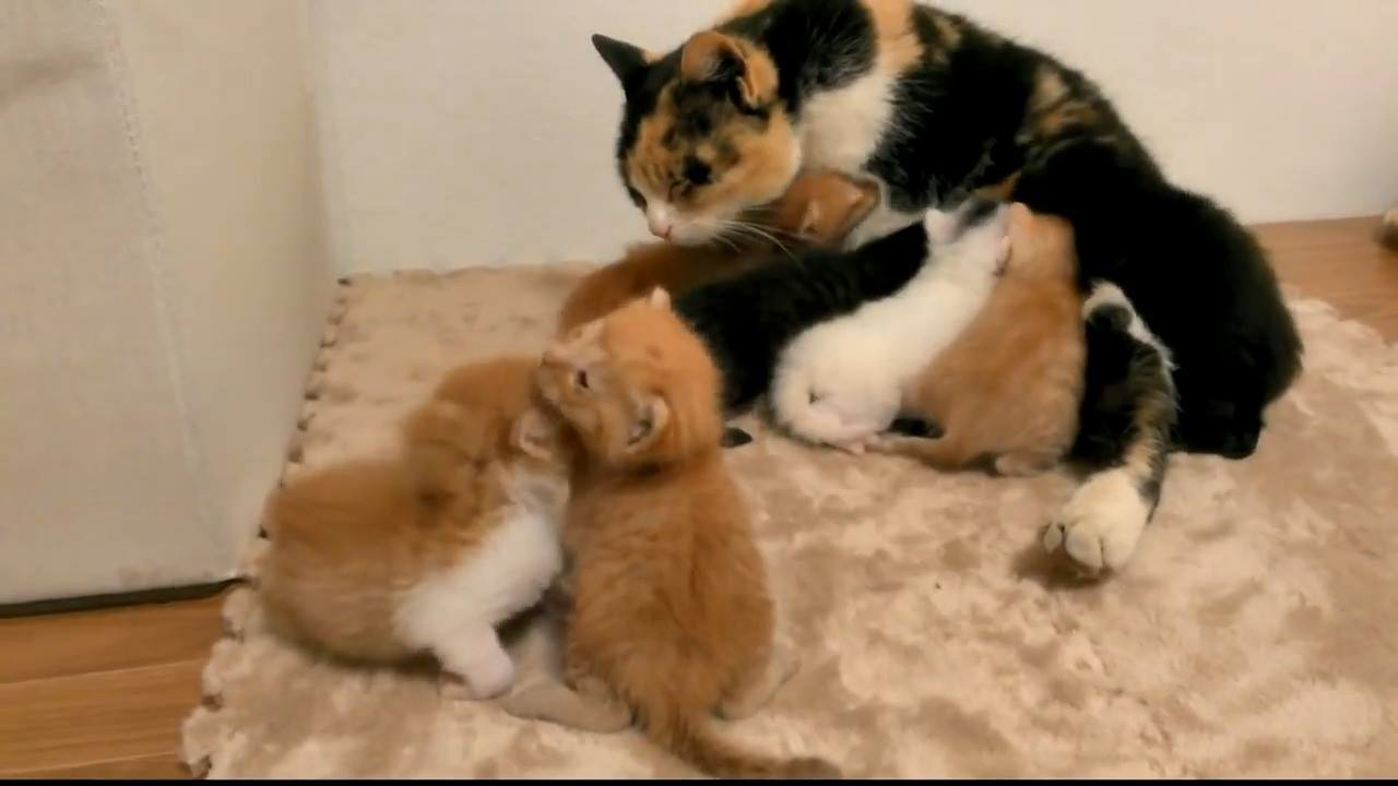 Filhotinhos de gatos com sua mamãe