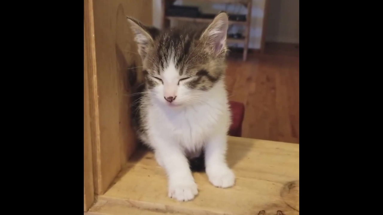 Filhotinhos de gatos mais fofos do mundo