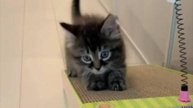 Filhotinhos De Gatos Sendo Fofos, Assista E Se Apaixone!