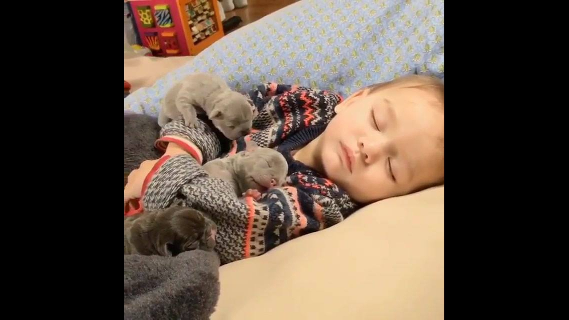 Filhotinhos dormindo com garotinho, olha só que fofura de vídeo!!!