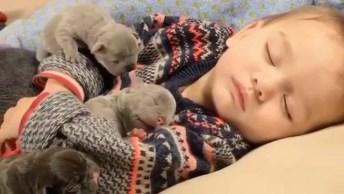 Filhotinhos Dormindo Com Garotinho, Olha Só Que Fofura De Vídeo!
