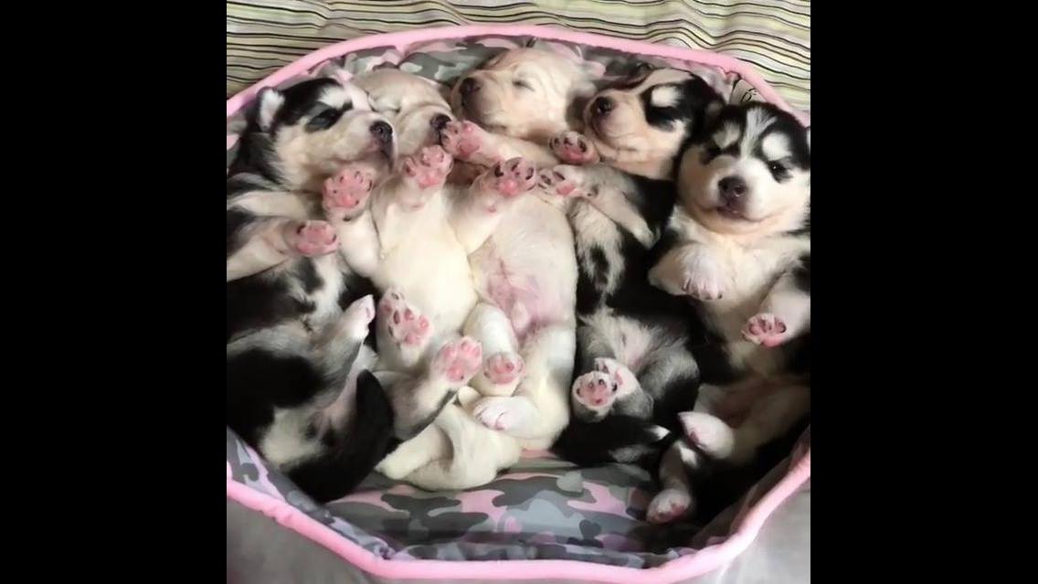 Filhotinhos fofinhos dentro de um cesto