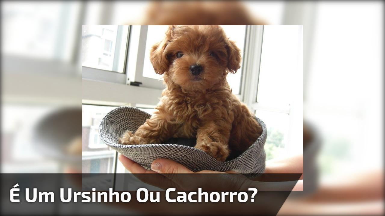É um ursinho ou cachorro?