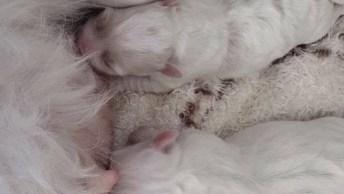 Filhotinhos Mamando Em Sua Mamãe, Se Você Ama Os Cães Compartilhe!