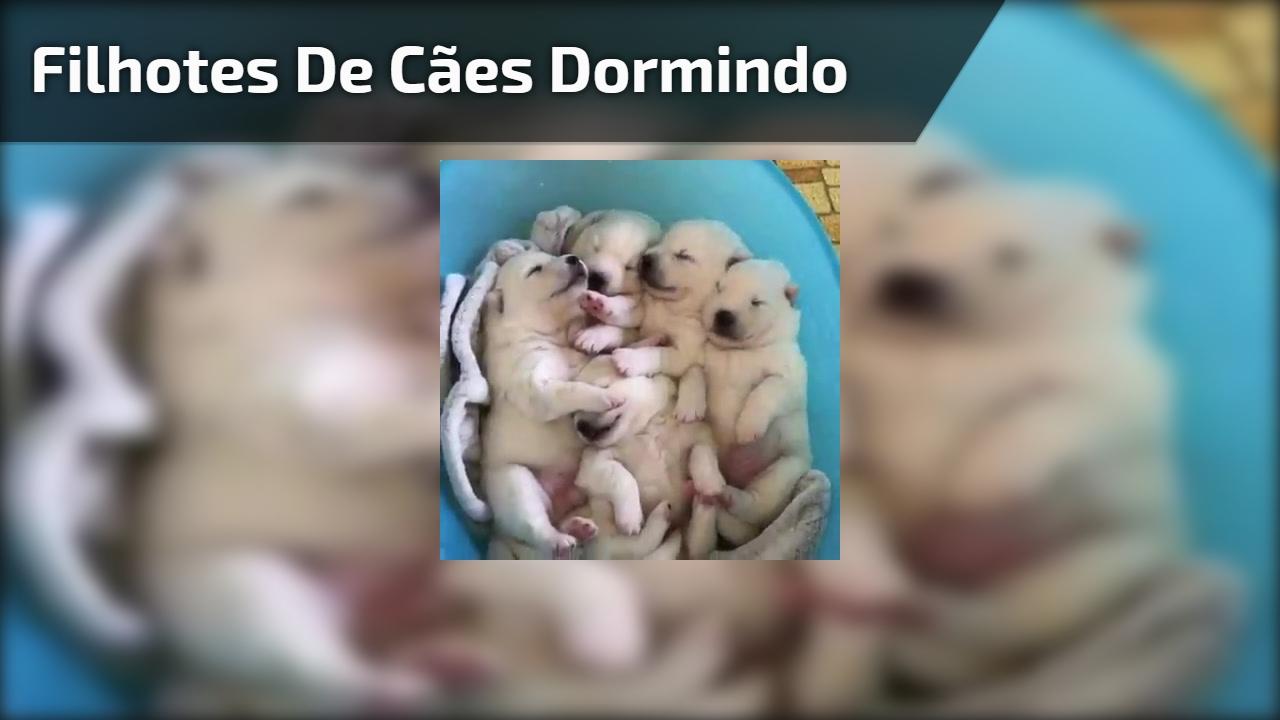 Filhotes de cães dormindo