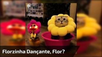 Florzinha Dançante, Espera Gatinho Dançante, Que Coisinha Mais Fofa!