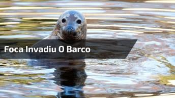 Foca Invadiu Barco Para Fugir Das Orcas, Olha Só Que Imagem Incrível!