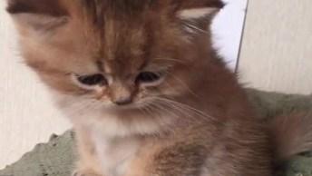 Fofura Do Dia, Veja Este Gatinho Lindo Com A Carinha Mais Doce Que Você Já Viu!
