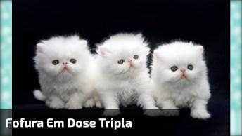 Fofura Em Dose Tripla! Olha Só Esses Três Gatinhos Lindos!