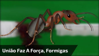 Formigas Fazendo Ponte Para As Outras Atravessarem, Confira!