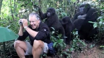 Fotografo É Surpreendido Por Gorilas No Parque Nacional De Bwindi, Confira!