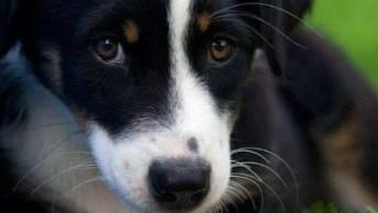 Fotos De Cachorros Fofos! É Uma Mais Lindinha Que A Outra Confira!