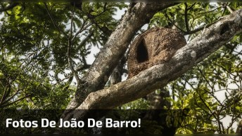Fotos De Um João De Barro Construindo Sua Casinha, Olha Só Que Espetáculo!