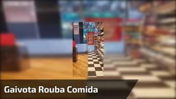 Gaivota Roupa Comida De Super Mercado E Sai Correndo, Olha Só Que Espertinha!