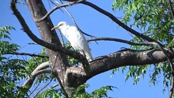 Garça Toma Sol Todos Os Dias No Mesmo Galho De Uma Árvore, Veja Que Linda!