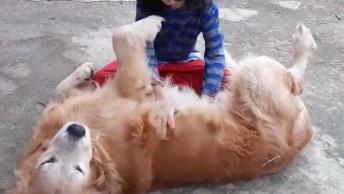 Garotinha Brincando Com Seu Cachorro De Estimação, Olha Só Que Fofo!