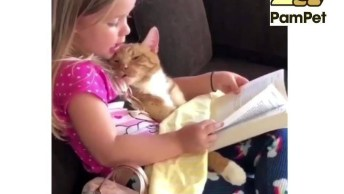 Garotinha Lendo Uma História Para Seu Gatinho, Olha Só Que Coisa Mais Linda!