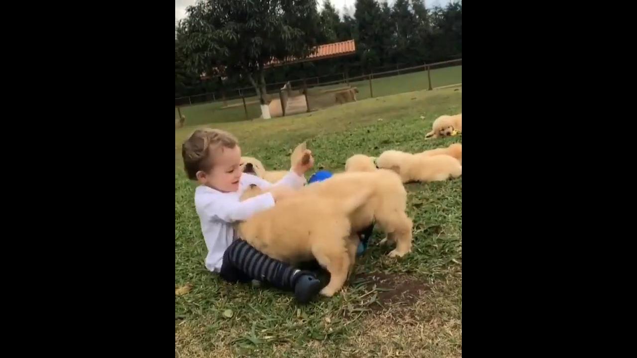 Garotinho brincando com filhotes de cachorros