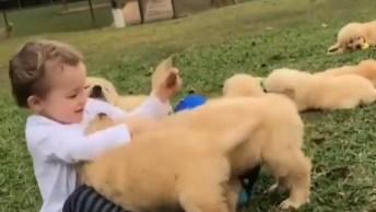 Garotinho Brincando Com Filhotes De Cachorros, Veja Que Lindas Imagens!