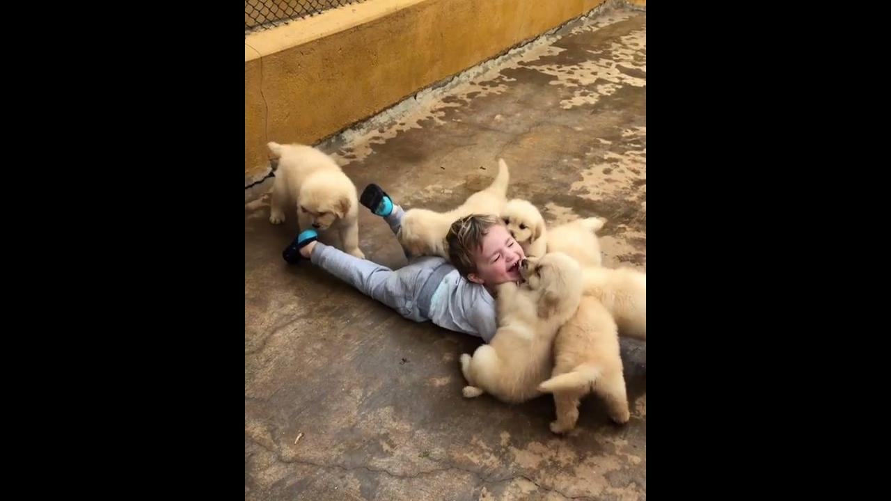 Garotinho brincando com filhotinhos fofos