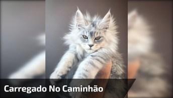 Garotinho Carregando Seu Gatinho No Caminhão De Reboque De Brinquedo!