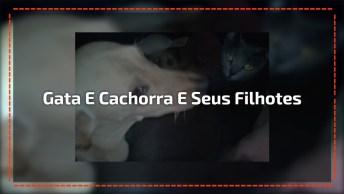 Gata Da Cria Dentro Da Casinha Da Cachorra, Uma História Muito Legal!